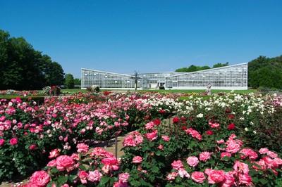 イベント「春の遠足~神代植物公園に行こう!」
