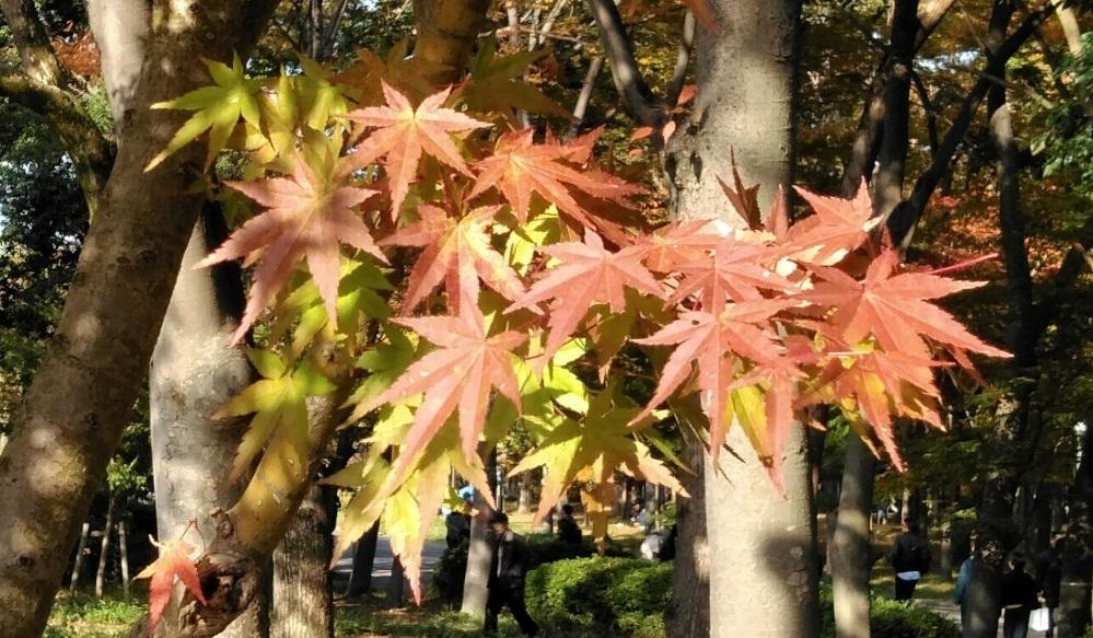 大阪城公園へ紅葉狩りに行ってきました♪
